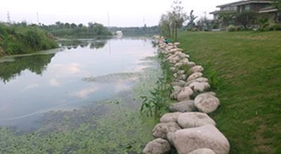 楝泽园绿化景观改造