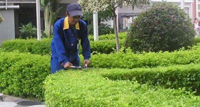 我国园林工厂绿化养护工程的标准和原则