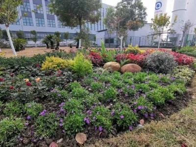 中国花卉协会杜鹃花分会签约参展第十届中国花卉博览会