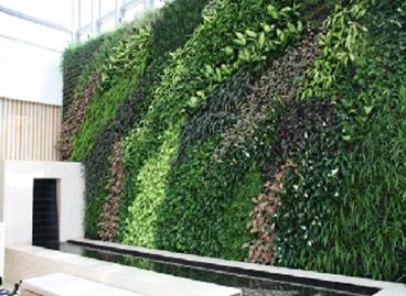 垂直绿化修饰