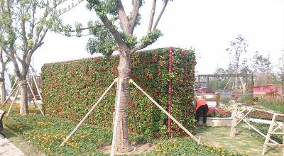 垂直绿化施工