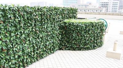 模块垂直绿化