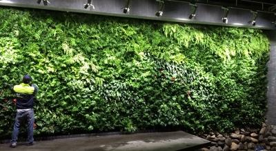 墙体垂直绿化