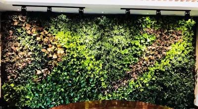 建筑物墙体绿化
