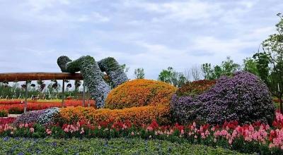景观绿化养护花雕含义