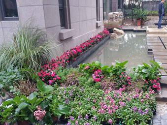 怎么设计庭院道路才有美观_植物的质地是否要考虑